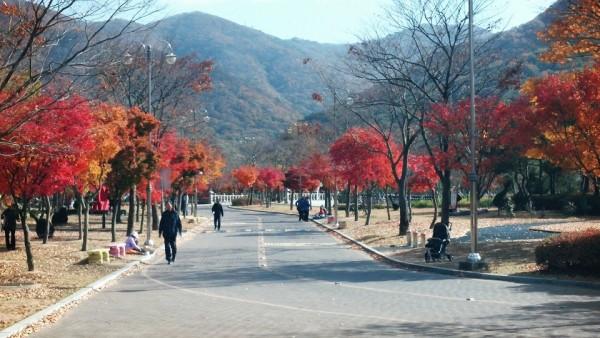 단풍으로 붉게 물든 아름다운 영광 불갑사-2.jpg