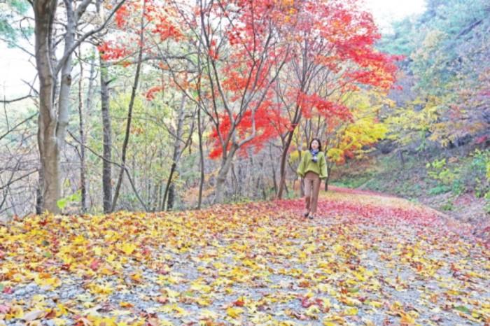 물무산행복숲임도단풍1.jpg