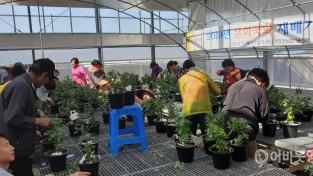 영광군농업기술센터, 국화 분재교육 인기 2.JPG