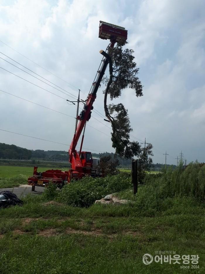 영광군, 태풍 '링링'에 쓰러진 나무 신속히 복구 완료 1.jpg