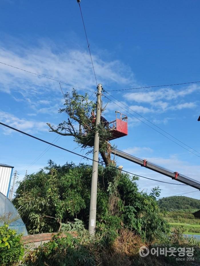 영광군, 태풍 '링링'에 쓰러진 나무 신속히 복구 완료 2.jpg
