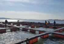 영광군, 해상가두리로 참조기 대량생산 돌파구 마련한다.