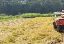 영광군, 올해 조생종 벼 첫 수확