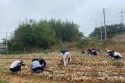 종합민원실, 농촌 일손돕기로 농가에 희망 전달