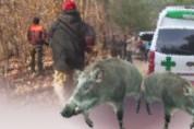 군남 용암마을서 주민A씨 멧돼지 습격으로 '중상'