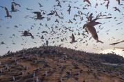 홍석봉 영광부군수, 야생조류의 천국 육산도 방문