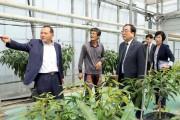 영광군 기후변화대응 아열대 작물 보급·확산에 박차