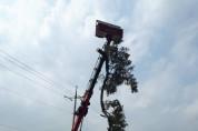 영광군, 태풍 '링링'에 쓰러진 나무 신속히 복구 완료