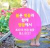 2018 영광 벚꽃 명소 BEST 개화시기는?