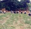 재무과, 양파 재배농가 일손지원