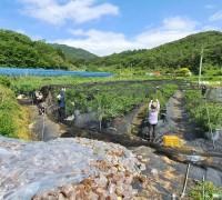 영광군 산림공원과 코로나19 극복 농촌 일손돕기